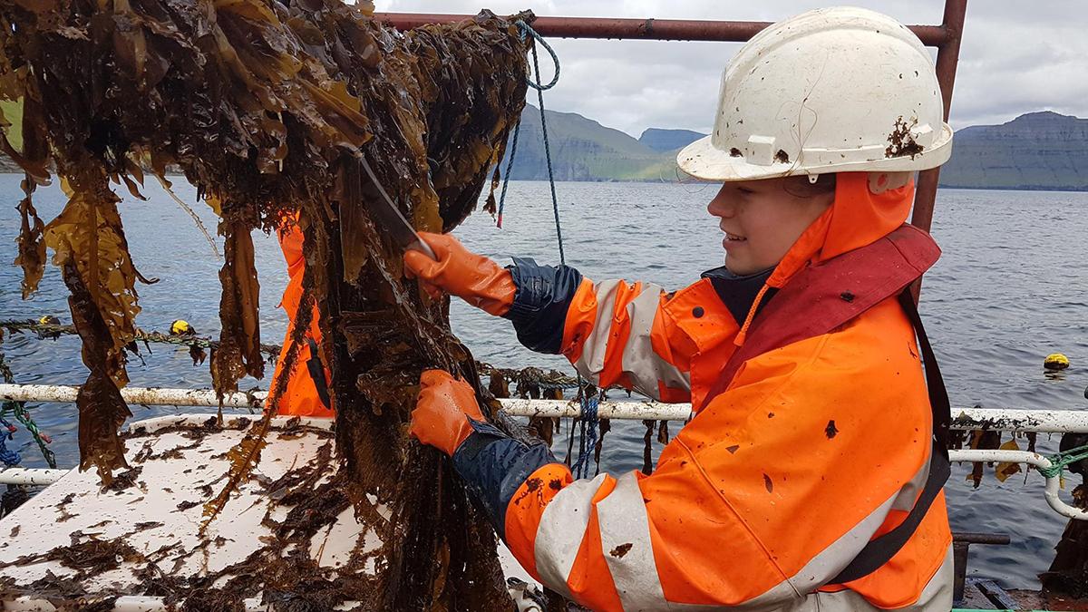 A woman picks seaweed.