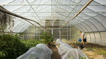 Man with watering can stands over rows of small plants in a greenhouse