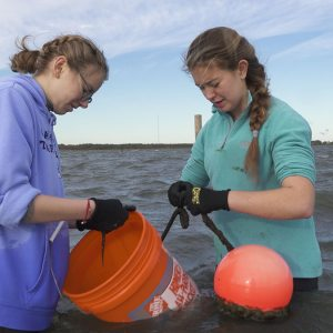 The Phyta team works in the water.