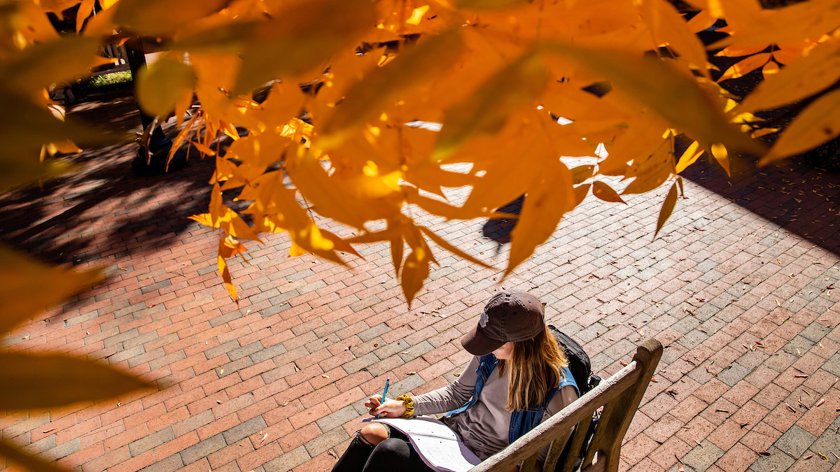A student reads on a bench under a tree that has turned yellow. .