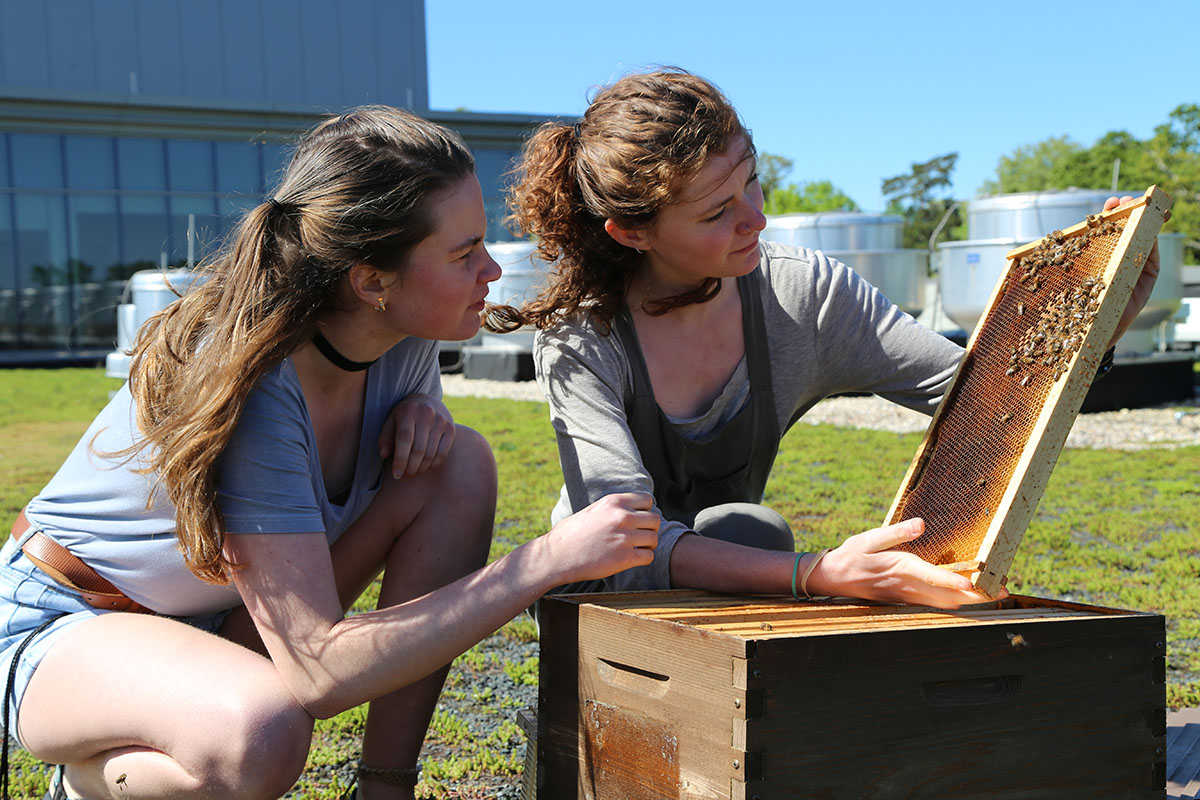 Two women look at a bee hive.