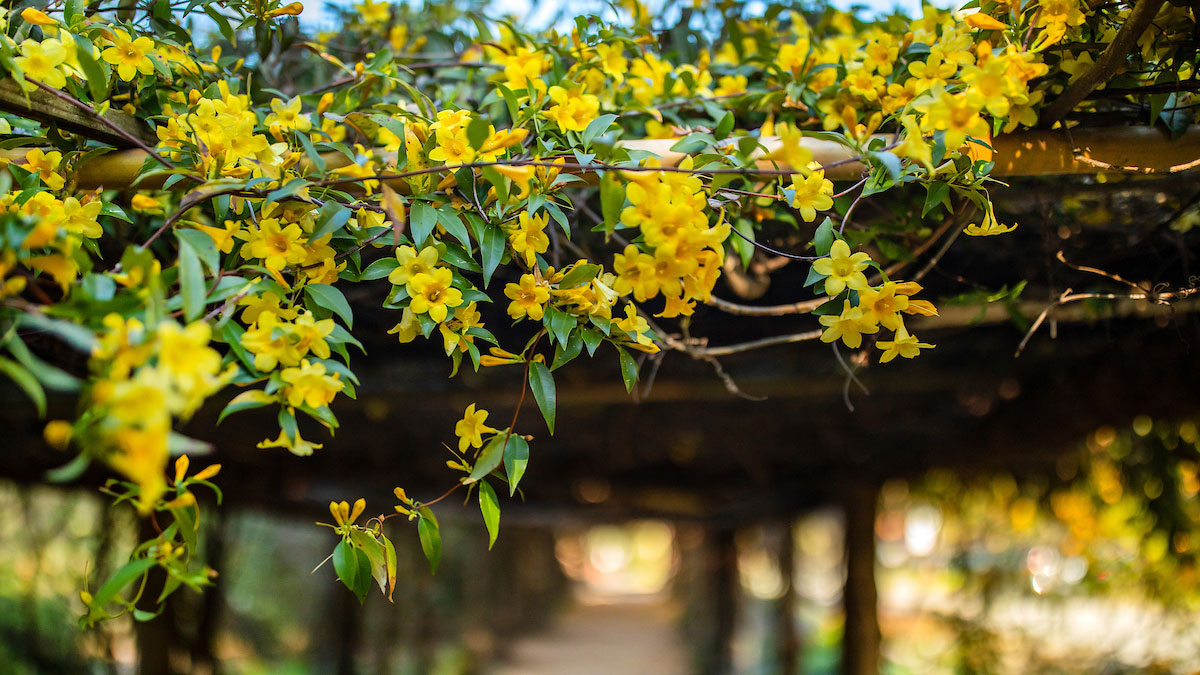 Yellow flowers blooming on a tree.