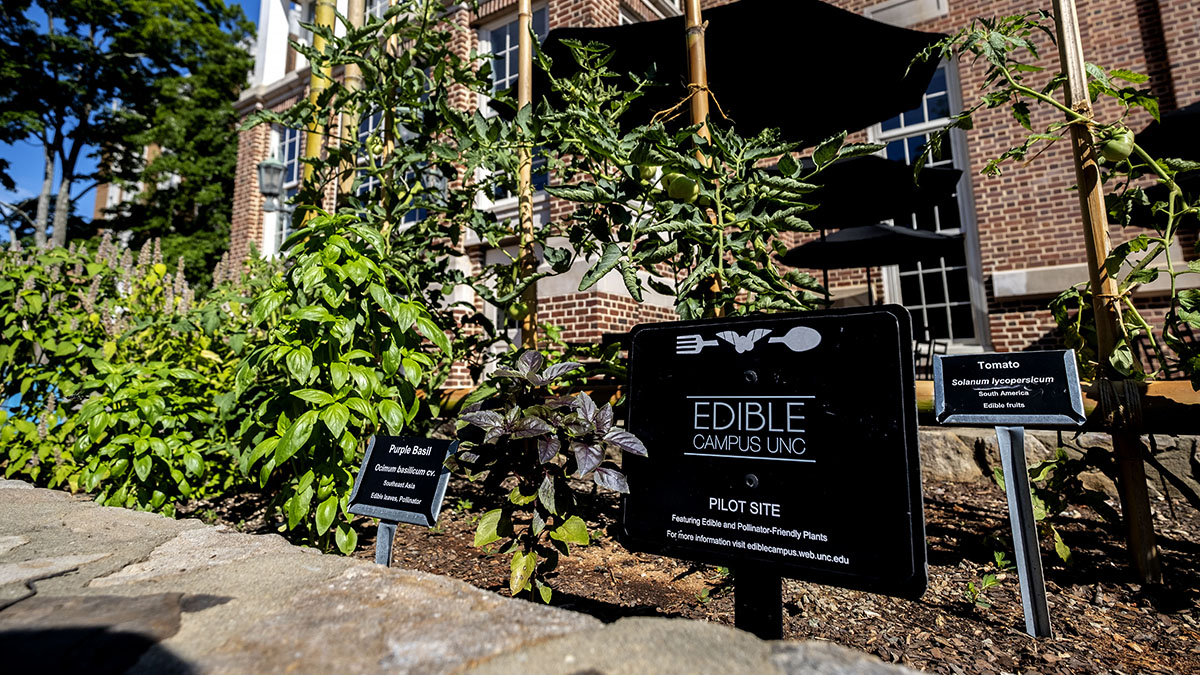 Edible Campus Garden outside Lenoir Dining Hall