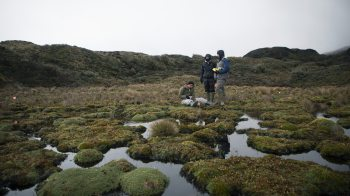 Students work in a marsh.