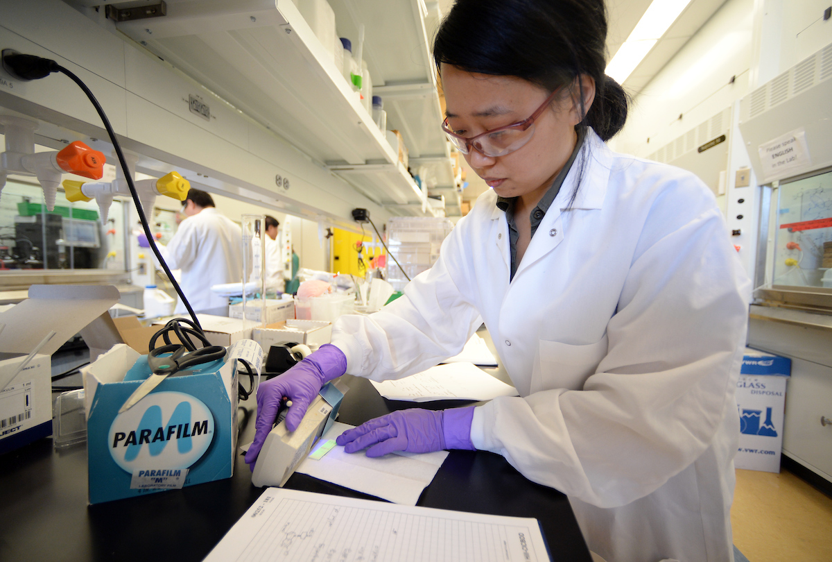 Student in lab coat with gloved hands works at lab bench