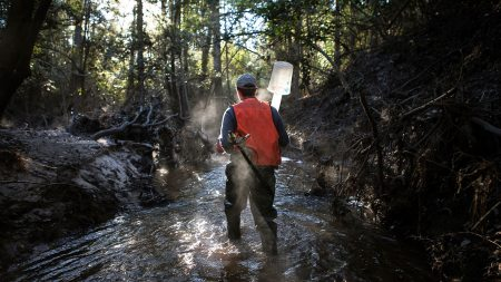 A research stands in a creek.