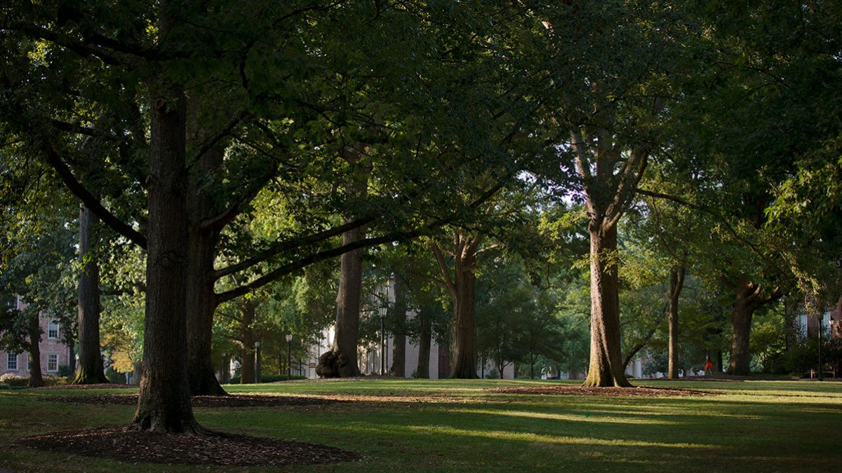 Trees on McCorkle Place.