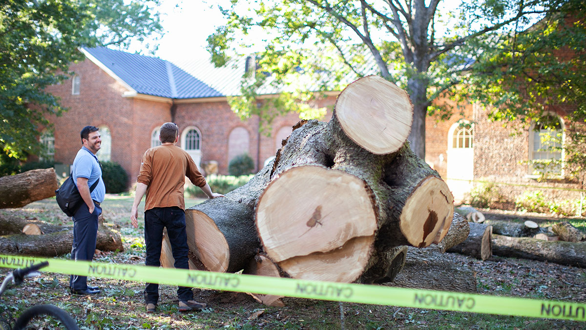 People stand near a felled tree.