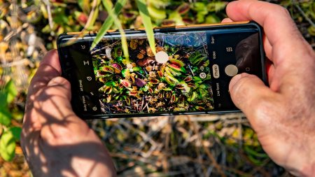 A photo of a phone taking a photo of venus fly traps.