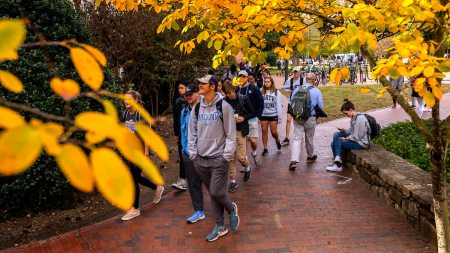 A student walks past a tree with yellow leaves