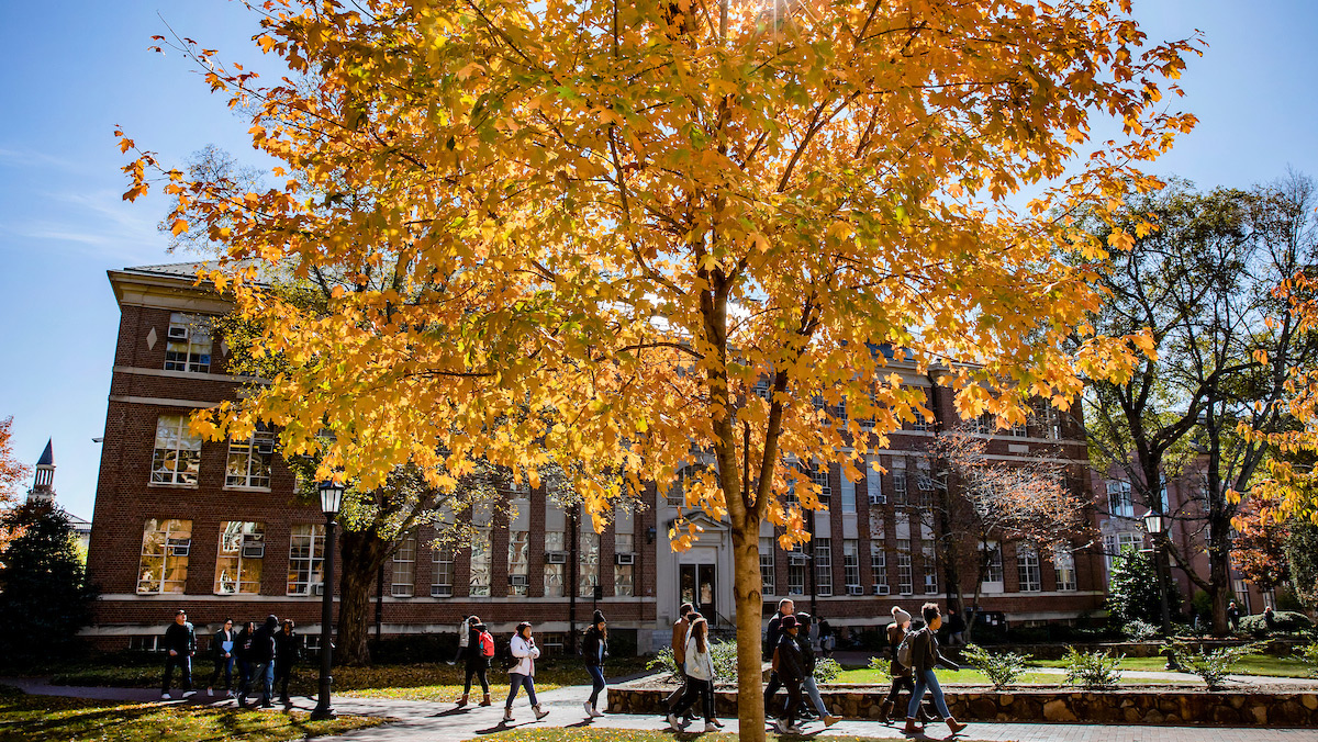 Students walk past a tree with yellow leaves.