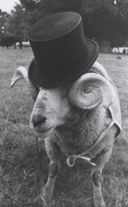 Rameses in a top hat