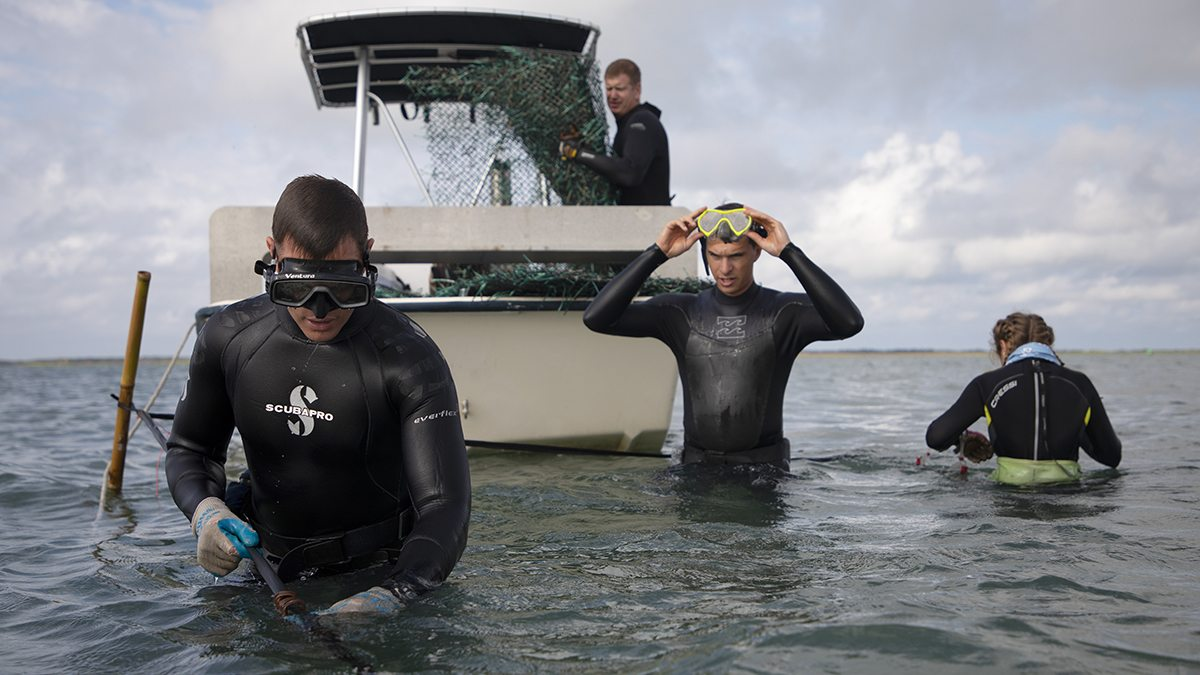 People work in the water in wetsuits.