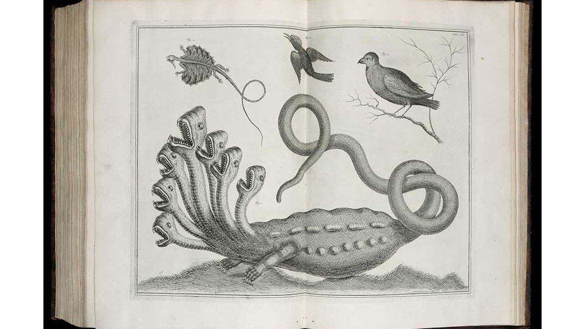 Ole Worm, Museum Wormianum (Leiden: Elsevir, 1655)