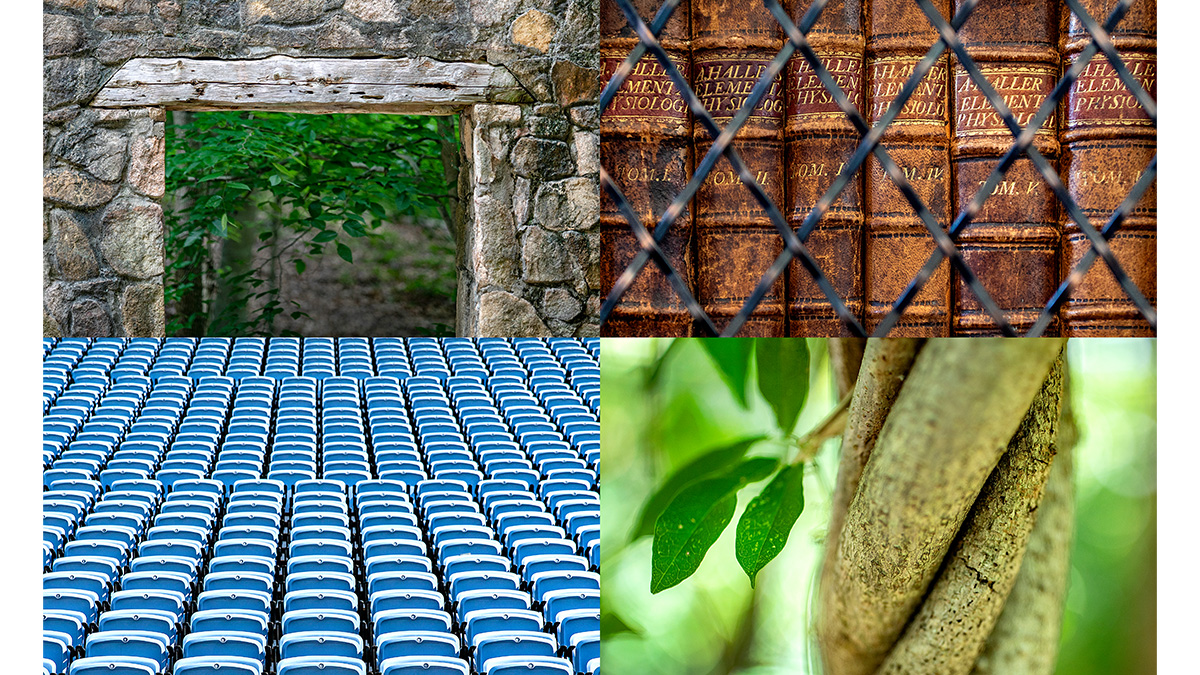 A collage of four campus photos, which includes a stone doorway from Forest Theater; Leather books on a Wilson library shelf; Rows of seats in Kenan Stadium; and vines twisting around each other.