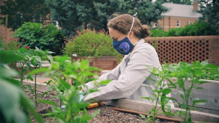 A student works in a garden.