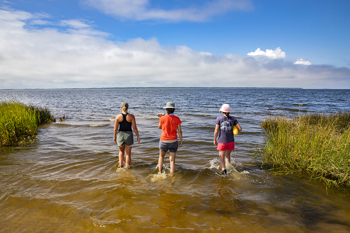 Three researchers walk into the ocean.