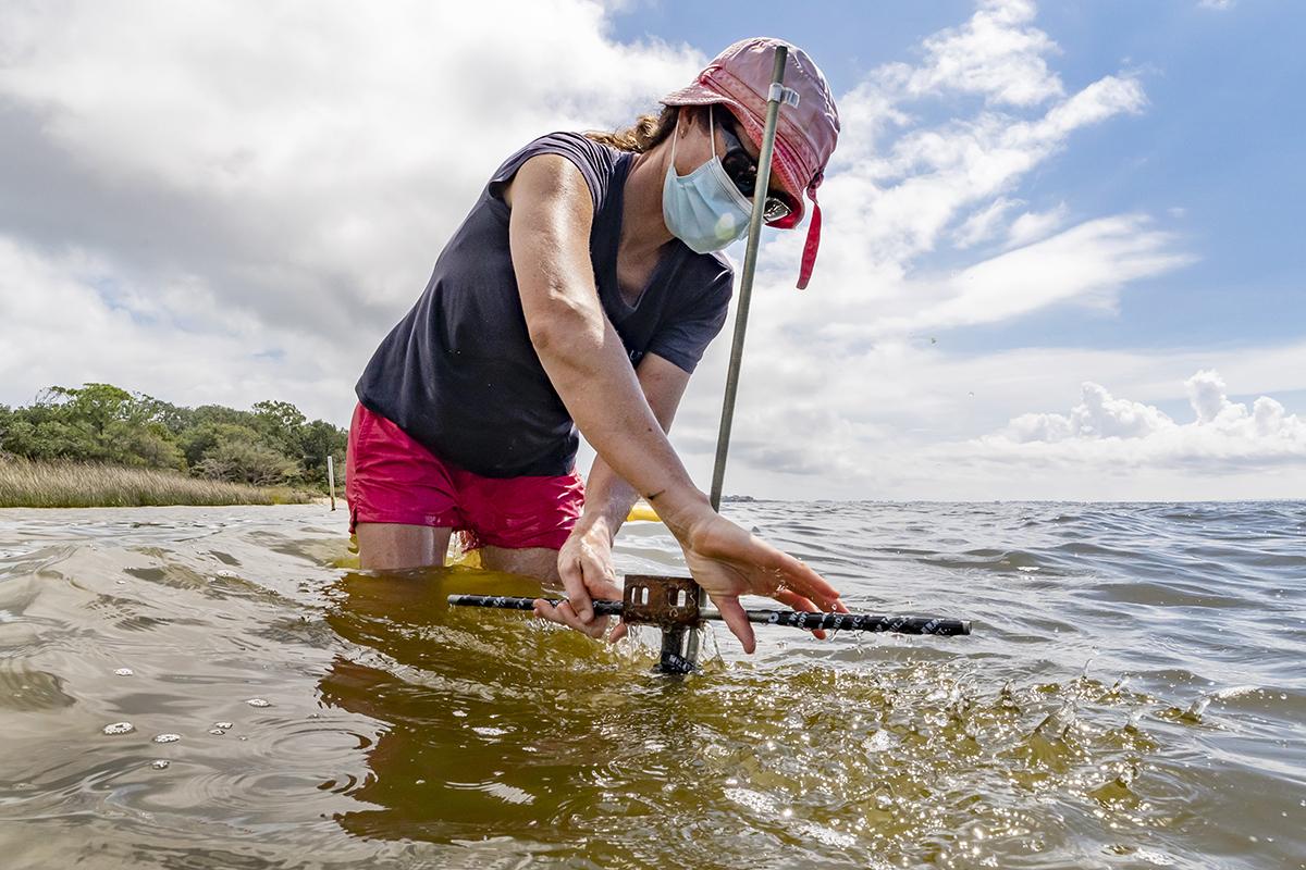 Johanna Rosman twists a tool that digs a hole into the shoreline.
