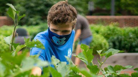 A man works in a garden.