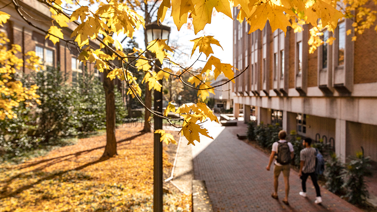 students walk on campus with yellow leaves on trees.
