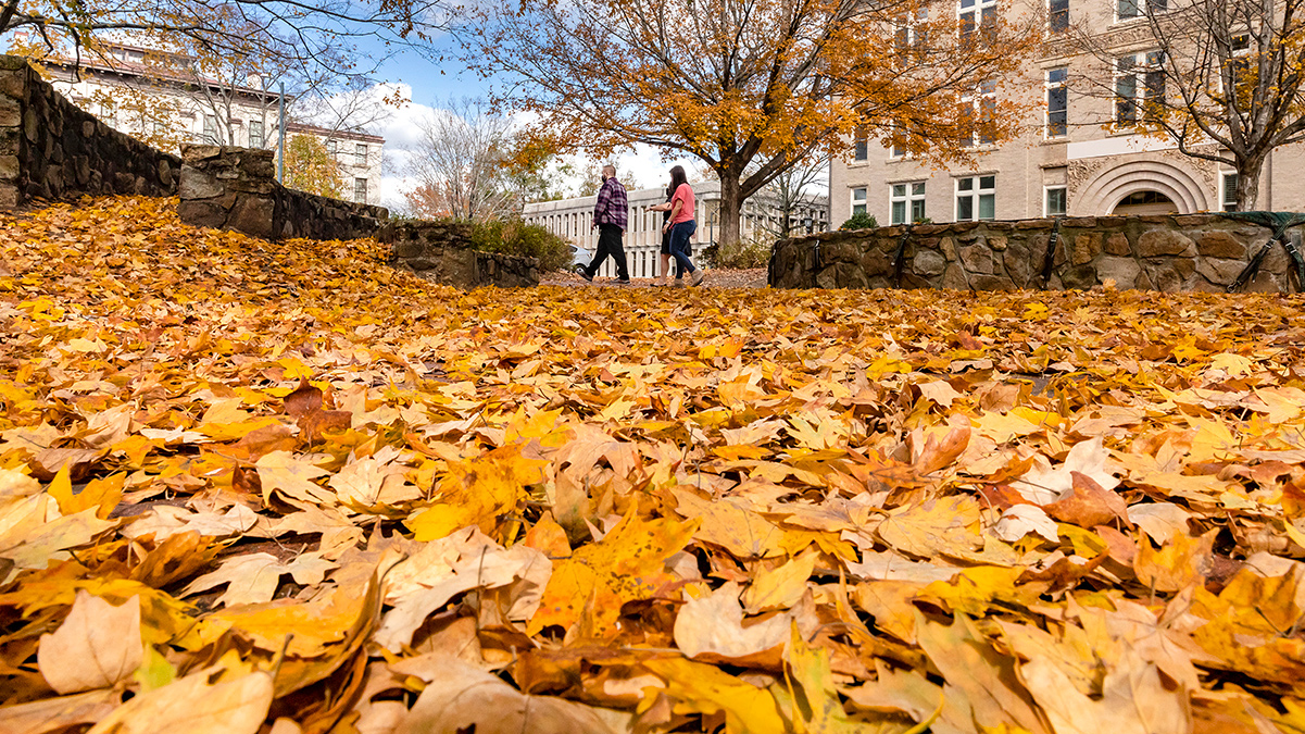 Students walk with yellow leaves on the ground.