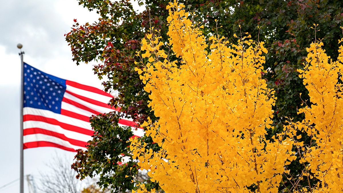 An American flag flies behind a yellow tree.