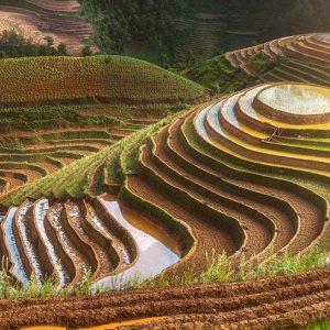 A field in Vietnam